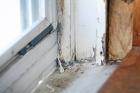 remove mold lead paint safe